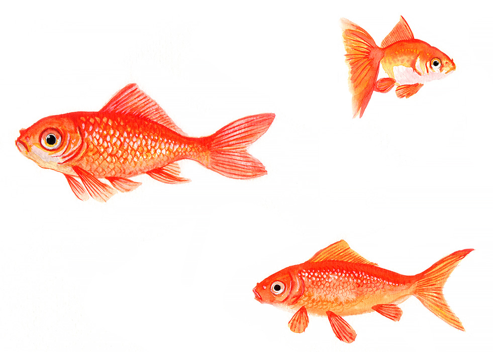 Goldfish pattern in watercolour